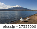 山中湖 世界遺産 白鳥の写真 27329008