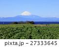 冬晴れの畑からの富士山 27333645
