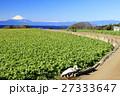 冬晴れの畑からの富士山 27333647