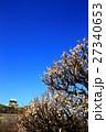 大阪城と梅の花 27340653