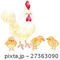 白バック にわとり 鳥のイラスト 27363090