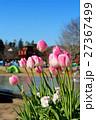 ふなばしアンデルセン公園 アイスチューリップ チューリップの写真 27367499