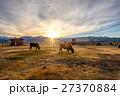ウシ 牛 夕日の写真 27370884