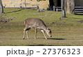 奈良公園中可愛的鹿及著名的東大寺 27376323