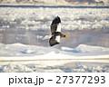氷海に羽ばたく 27377293