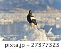 氷海の王者 27377323