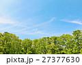 青空 空 木々の写真 27377630