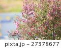 エリカの花 27378677