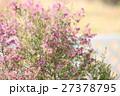 エリカの花 27378795
