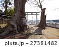 若宮八幡宮に立つケヤキ(茨城県常陸太田市) 27381482