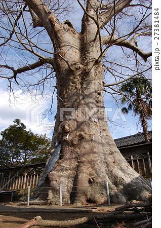 若宮八幡宮に立つケヤキ(茨城県常陸太田市) 27381484