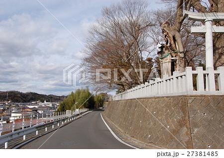 若宮八幡宮に立つケヤキ(茨城県常陸太田市) 27381485