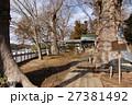 若宮八幡宮に立つケヤキ(茨城県常陸太田市) 27381492