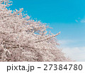 桜 空 風景の写真 27384780