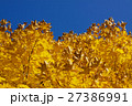 Yellow autumn leaves 27386991