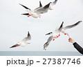 カモメの餌やり 観光 27387746