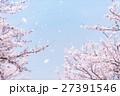 桜吹雪 27391546