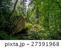 森林 林 森の写真 27391968