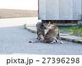 相島の猫カップル 2 キス 27396298