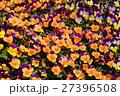 ビオラ 植物 花の写真 27396508