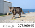 猫 野良猫 動物の写真 27396945