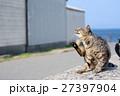 猫 野良猫 動物の写真 27397904