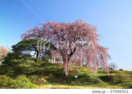 中井田の桜(郡山市) 27400421