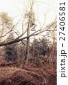 木々 樹木 森林の写真 27406581