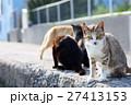 相島のかわいい猫たち キジトラ白猫 覗き込み 27413153