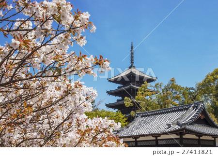 仁和寺 京都の桜 五重塔と桜 春の京都観光 27413821