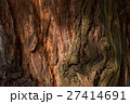 冬の木漏れ日 27414691