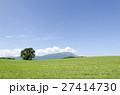 小岩井農場 一本桜 夏の写真 27414730