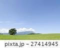 小岩井農場 一本桜 夏の写真 27414945