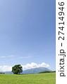 小岩井農場 一本桜 夏の写真 27414946