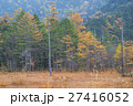 カエデ メープル 楓の写真 27416052