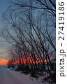 樹木 樹 ツリーの写真 27419186