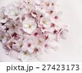 桜の花 27423173