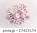 桜の花 27423174