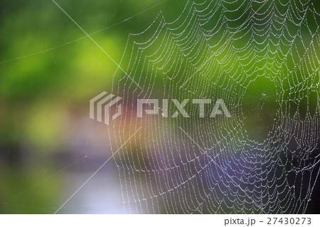 蜘蛛の巣と水滴 27430273