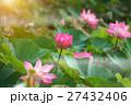 きれい 綺麗 花の写真 27432406