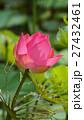 きれい 綺麗 花の写真 27432461