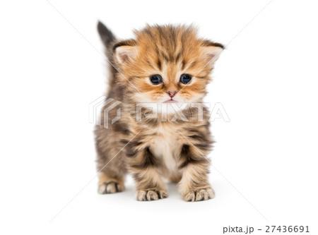 cat behaviorist orlando