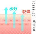 肌 乾燥 断面のイラスト 27438594