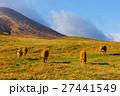 阿蘇草原の褐毛和牛 27441549