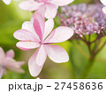 紫陽花 6月 鎌倉 27458636