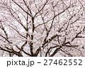 桜 曇り空バック 白バック 27462552