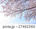 桜 曇り空バック 白バック 27462560
