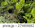 くも クモ スパイダーの写真 27469882