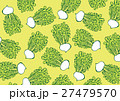 かぶ 蕪 水彩画 柄 パターン 27479570