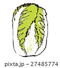 白菜 ハクサイ 水彩画 27485774
